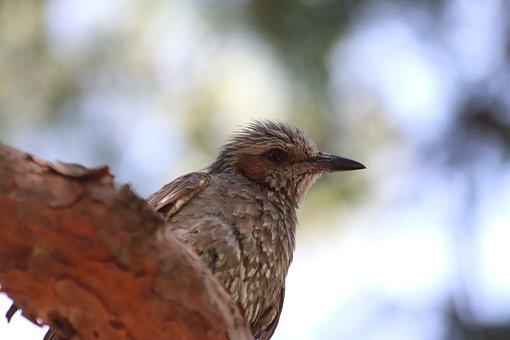 Direct Foil Copper, Passerine, Birds, Park