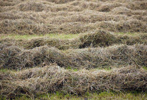 Hay, Dried, Turned, Meadow, Cattle Feed, Dried Grass