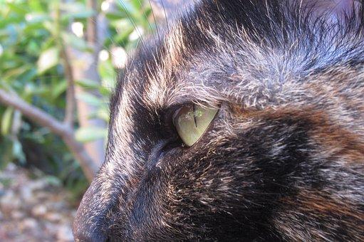 Cat, Face, Eye, Side, Animal, Pet, Mammal, Domestic