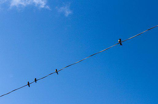 Birds, Wire, Sky, Nature, Fly, Flock, Feather, Line