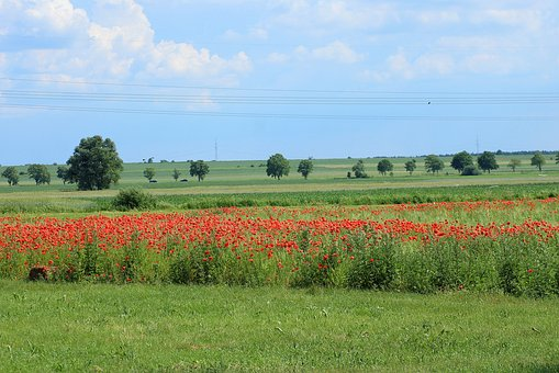 View, Landscape, Spring, Fields, Poppies, Red, Green
