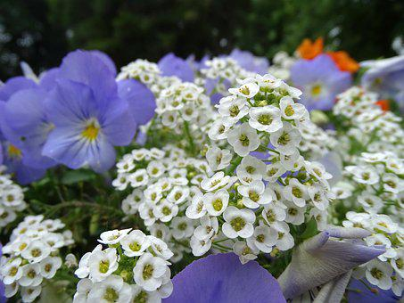 Flowers, Flower Bed, Multi Color, Garden Plants