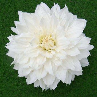 Nature, Flowers, Flora, Beautiful Flower, Nature Flower