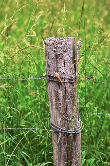 Wood Pile, Barbed Wire, Fence, Meadow, Grasses, Pasture