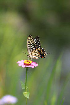 Flowers, Butterfly, Insects, Nature, Plants, Wildflower