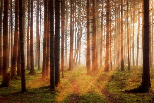 Forest, Trees, Sunbeam, Autumn, Off Road, Landscape