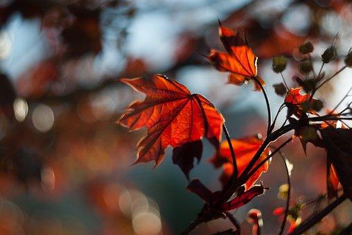 Nature, Tree, Leaves, Plant, Leaf, Sunlight, Sunrise