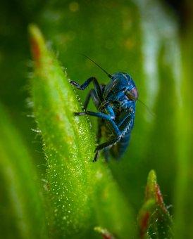 Insect, Bespozvonochnoe, Macro