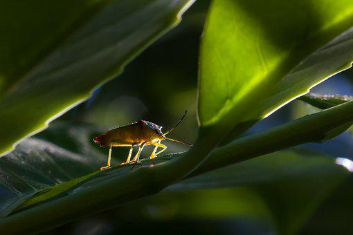 Bug, Nature, Insect, Leaf, Insect Photo