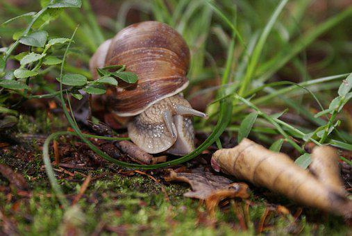 Snail, Forest, Nature