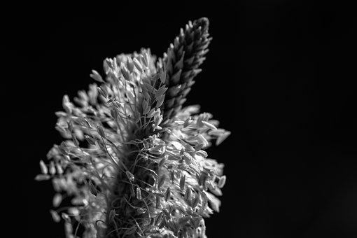 Plantain, Wild Plant, Medicinal Plant, Nature, Flower