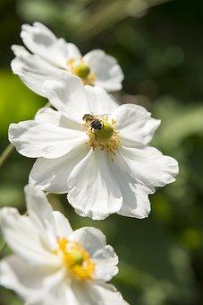 Flower, Nature, Plant, Summer, Garden, White Flower