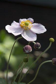Flower, Nature, Plant, Summer, Garden, Spring