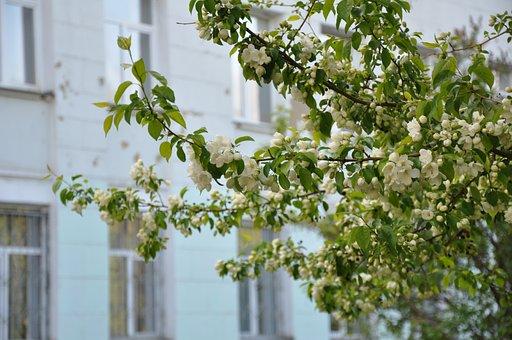 Spring, Bloom, Apple Tree, Tree, Nature, Flowers