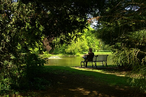 Park, On The Lake, Green, On The Bench, Holiday, Nature