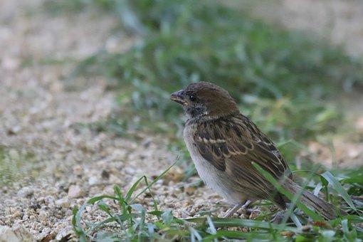 Sparrow, New, Park, Birds, Outdoors, Passerine, Outdoor