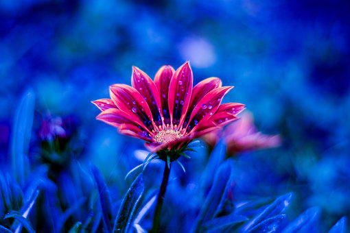 Nature, Flower, Plant, Grass, Dew, Water Drop