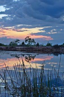 Grass, Pond, Sunset, Lake, Dusk, Landscape, Vertical