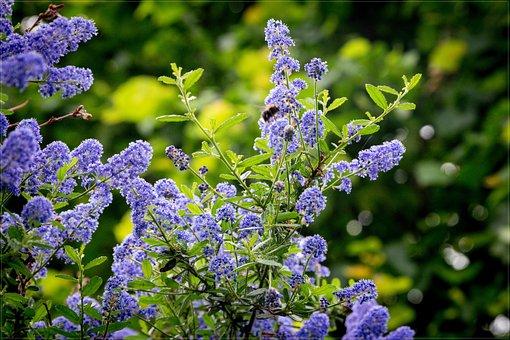 Spring, Purple, Green, Summer, Blossom, Plant, Garden