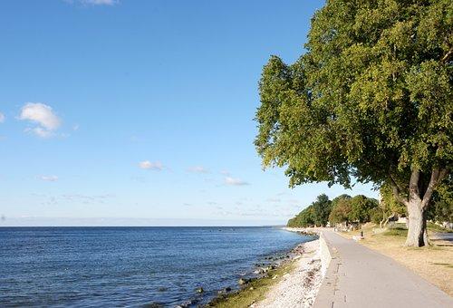Beach, Tree, Nature, Sea, Summer, Ocean, Sky, Sand