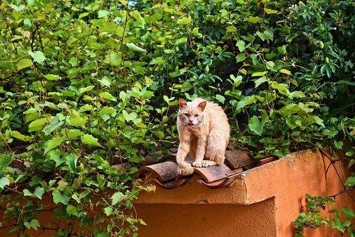 Cat, Animal, Mammal, Feline, Domestic, Pet, Sitting