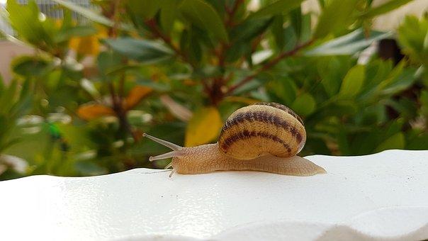 Snail, Animal, Nature, Green, Summer, Slime, Crawl