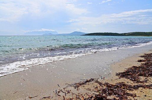Sea, Beach, Water, Surf, Strandline, Sand, Seaweed