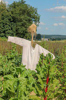 Scarecrow, Birds, Vegetable Field, Field, Bed, Fields