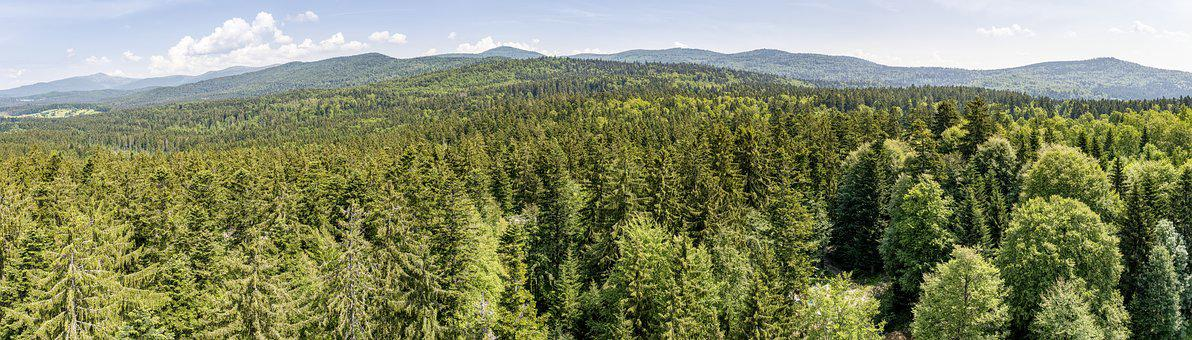 Bavarian Forest, View, Forest, Nature, Trees, Landscape