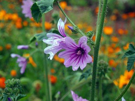 Wild Flower, Geranium, Needle Of Salamanca