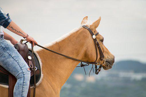 Horse, Western, Ride, Arabs, Palomino, Animal, Reins