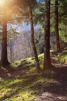 Landscape, Nature, Away, Forest Path, Trees