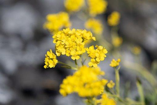 Flower, Yellow, Yellow Flower, Blossom, Bloom