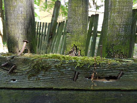 Fence, Forest, Park, Nature, Green, Bush, Wood Fence