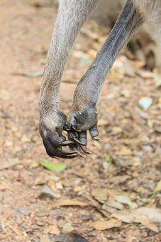 Kangaroo, Paws, Claws