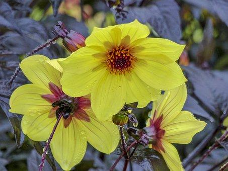 Flower, Yellow, Plant, Nature, Close Up, Summer, Season