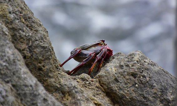 Sea, Crab, Rocks, Crustacean