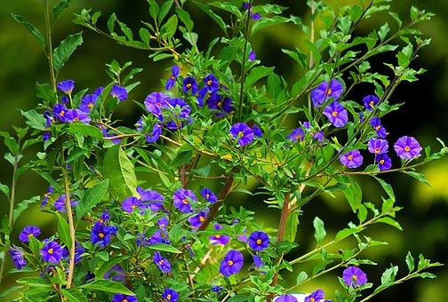 Flower, Gentian, Blue, Blue Flower, Kind Of Gentian