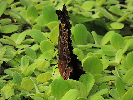 Butterfly, Letter, Green, Nature, Fly, Flower, Plants