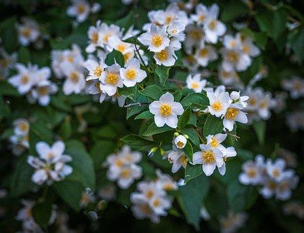 Bush, Spring, Flowers, White, Yellow, Green