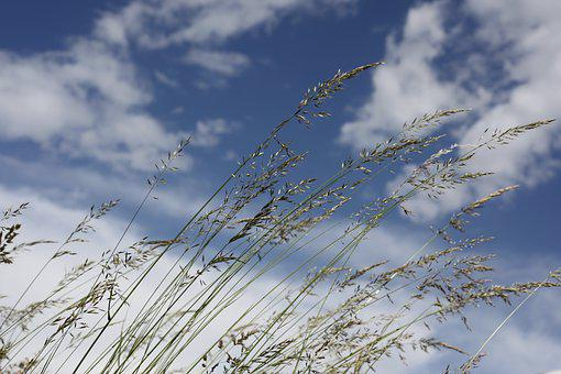 Wind, Forward, Grasses, Sky, Nature, Blades Of Grass
