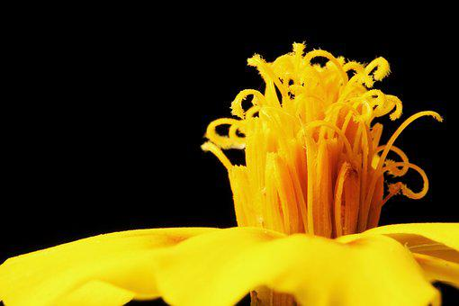 Marigold, Flower, Yellow, Close, Macro, Garden, Flowers