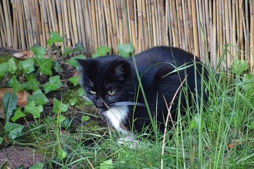 Domestic Cat, Garden, Idyll, Relax