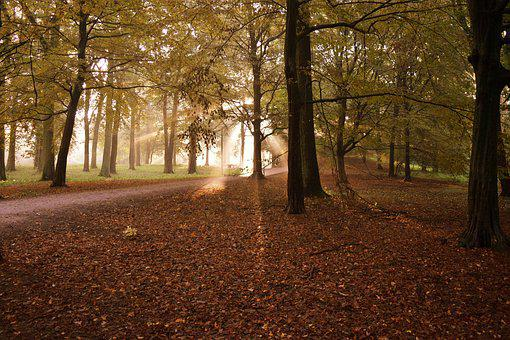 Germany, Fall, Autumn, Season, Forest, Nature, Outdoor