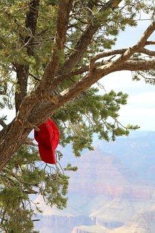 Tree, Grand Canyon, Landscape