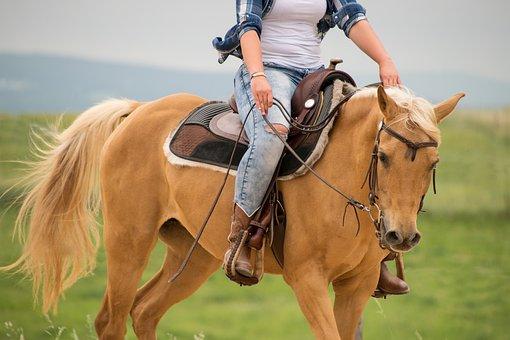 Horse, Western, Palomino, Arabs, Saddle, Reins, Reiter