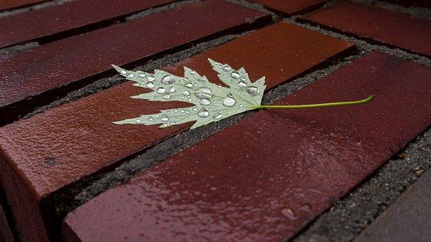 Leaf, Stone, Wet, Drip, Water, Leaves