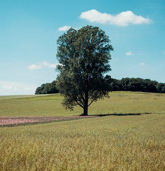 Tree, Nature, Poppy, Sky, Landscape, Blue, Mood, Summer