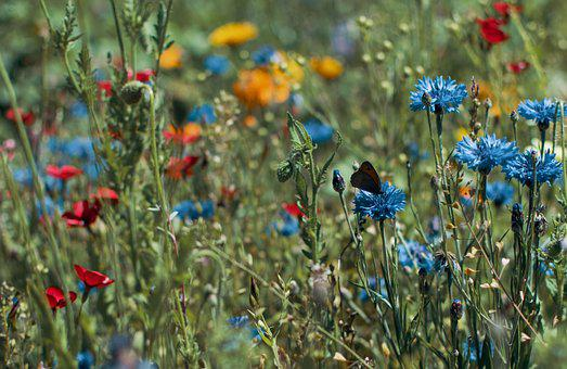Color, Colorful Flowers, Nature, Sea Of Colour