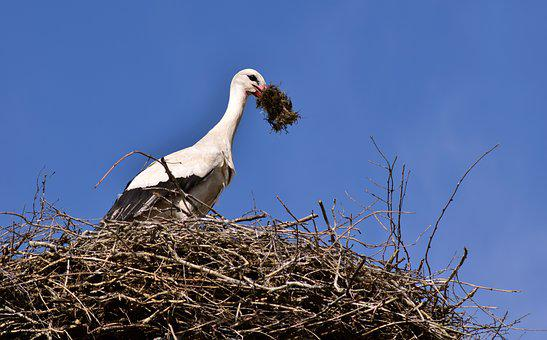 Stork, Nest, Bird, Storchennest, Rattle Stork, Nature